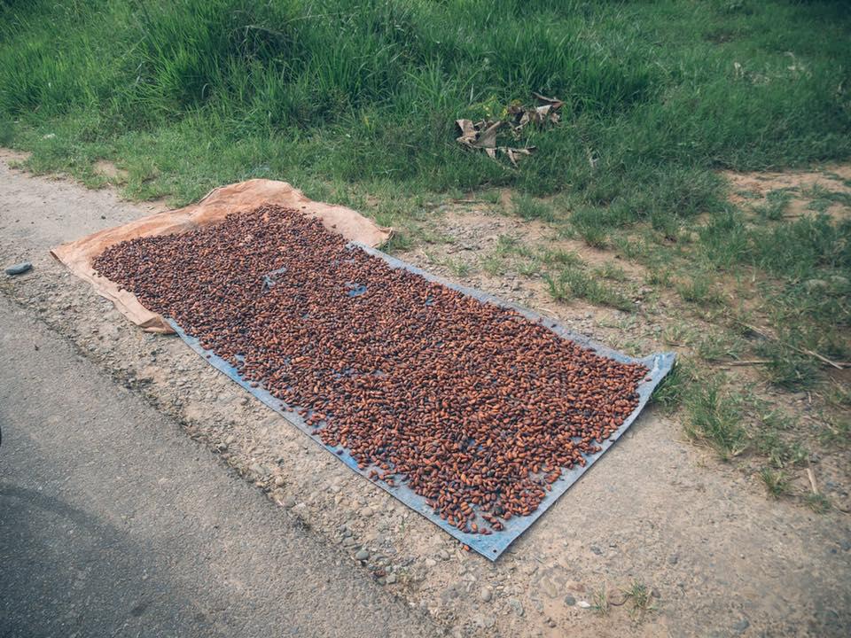 Cacao 3