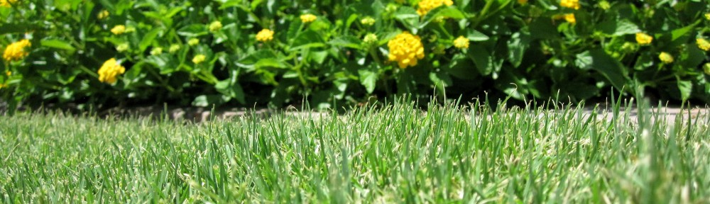 how to kill grass along the fence line