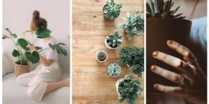 7 Plantas para interiores ¡Bajo Mantenimiento!