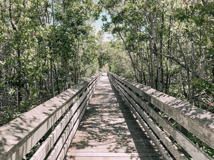 tigertail beach park mangrove forest florida wetlands