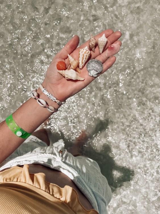 SWFL shells, florida shelling, seashells, cone shell, scallops