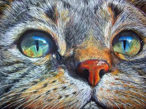 Visage de chat - Diamond Painting 5D - Peinture au diamant
