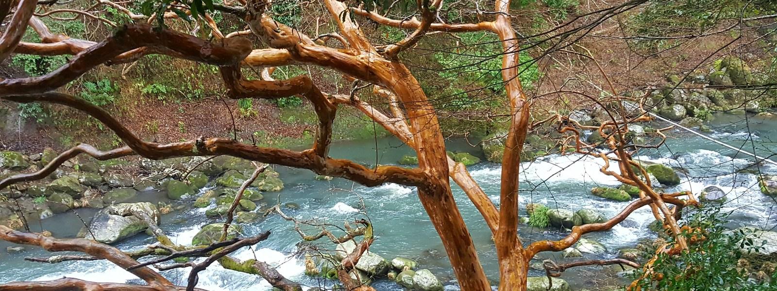 A Ryokan Stay in Hakone
