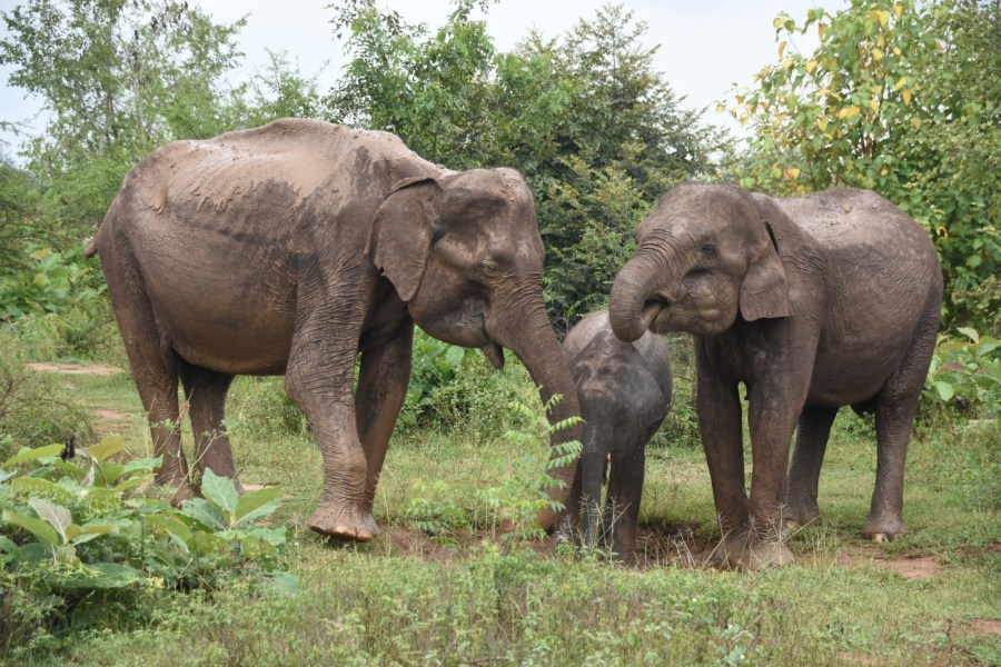 Safaris in Udawalawe and Yala National Parks
