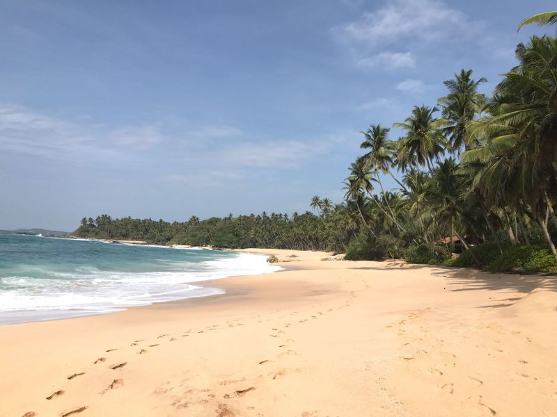 Exploring the South Coast: Galle Fort, Mirissa and Tangalle