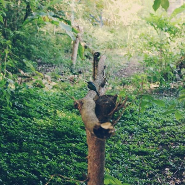 Adventure Nature Park, Tobago