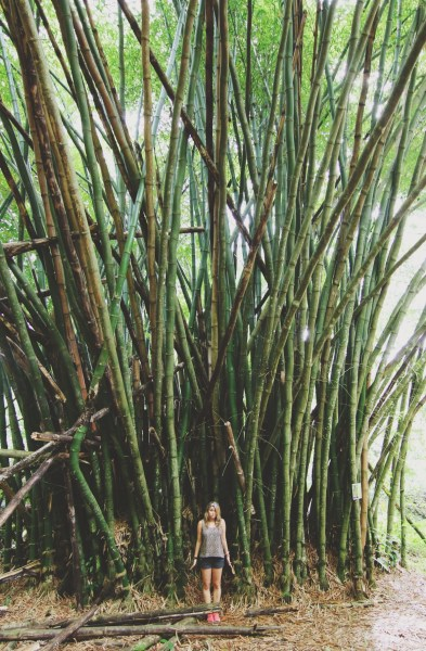Bamboo, Island Tour  | Tobago