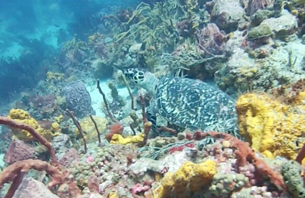Blue Waters Diven - Speyside Tobago