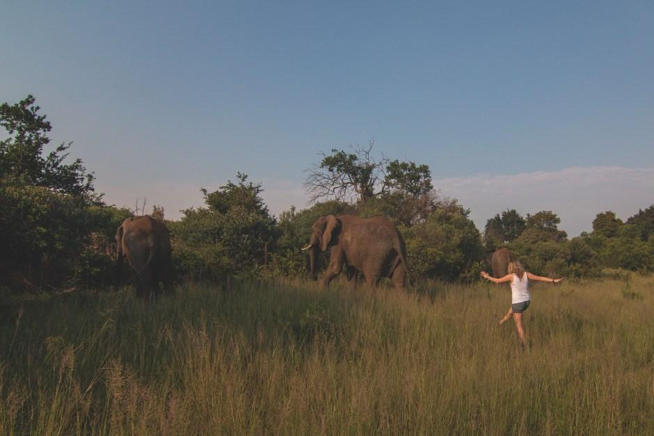 Elephant Thumb-01