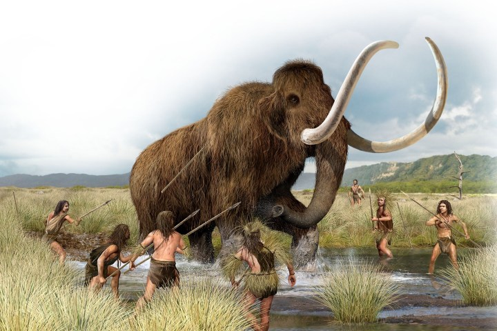 Hunter / gatherers attack a wooly mammoth