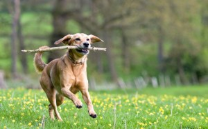 dog-playing-heysmokies