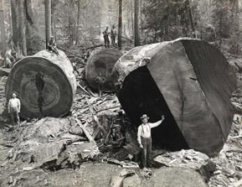 tremont-logging-heysmokies