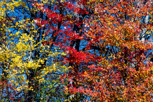 fall-foliage-kenneth-keifer-foothills-parkway-heysmokies