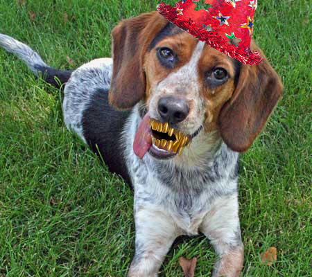 gold-tooth-hound-dog-april-fools-heysmokies