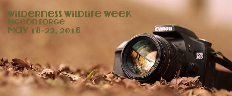 Wilderness Wildlife Week in Pigeon Forge May 2016