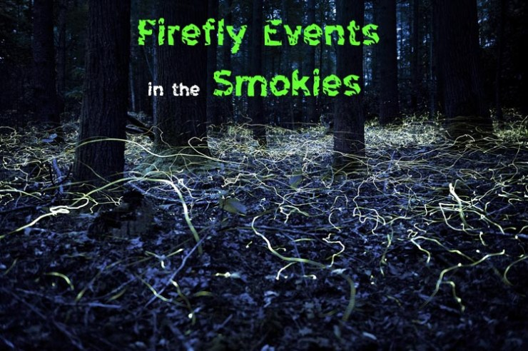 Synchronous Fireflies in Great Smoky Mountains June 2017