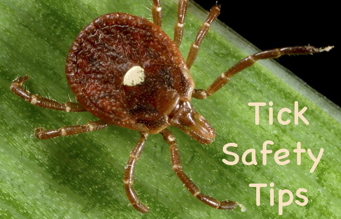 Tick Safety Tips Ticks And What You Need To Know Heysmokies