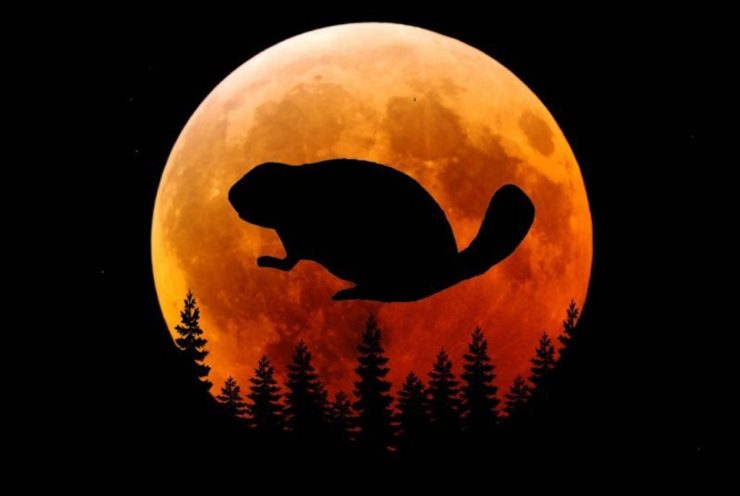 Smoky Mountain Beaver Moon will be on the rise soon.