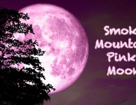 Smoky Mountain pink moon is on the rise!