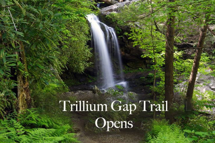 Grotto Falls is one of the many highlights of Trillium Gap trail!