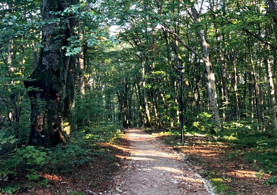 path through the woods from Mukinje to Plitvice Lakes National Park, Croatia