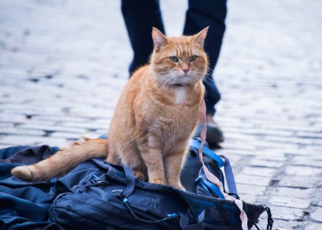 Bob. Director and Co-producer Roger Spottiswoode. Producer Adam Rolston of Shooting Script Films. Screenplay adapted by Tim John and Maria Nation; based on the International Best Selling book A Street Cat Named Bob.