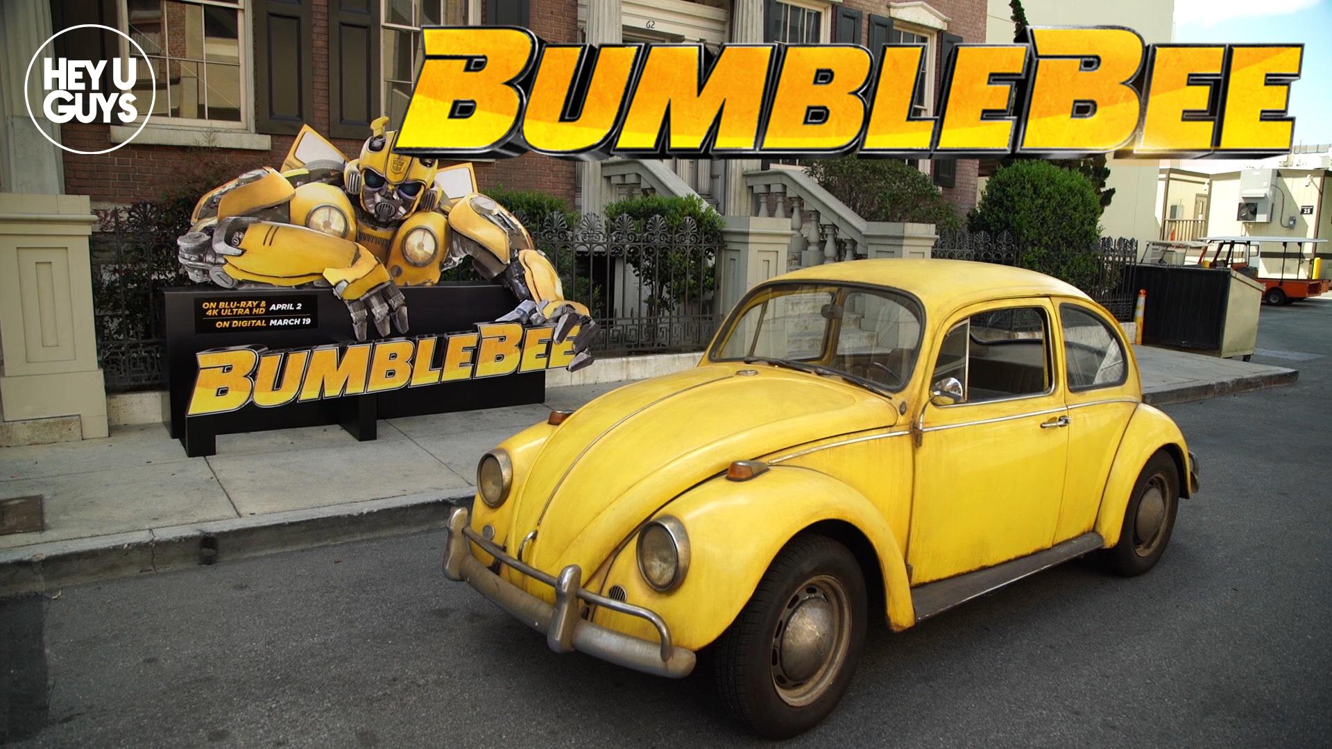 bumblebee-sizzle