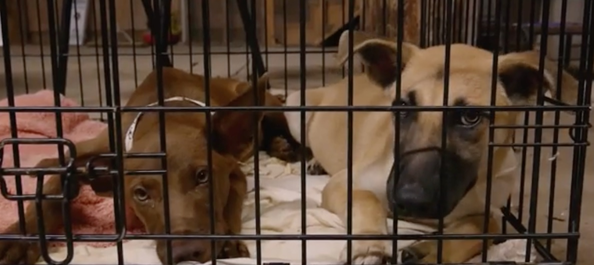 Austin Pets alive harvey