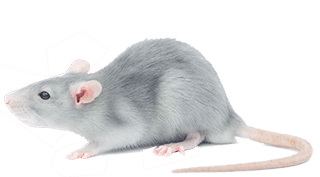 rat exterminator services in michigan