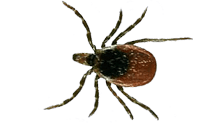tick-exterminator-in-troy-michigan and surrounding cities