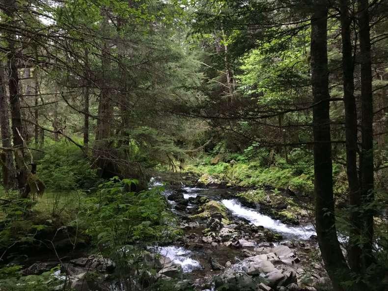 forest diversity.jpg
