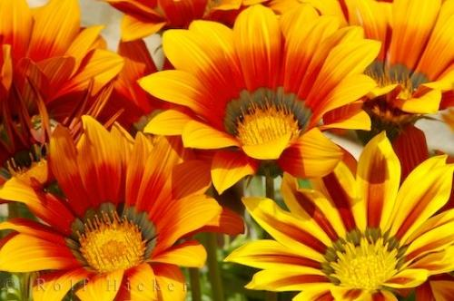 Image result for flowers of spain