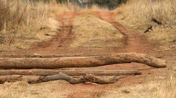 Why Everyone Should Try An Obstacle Race