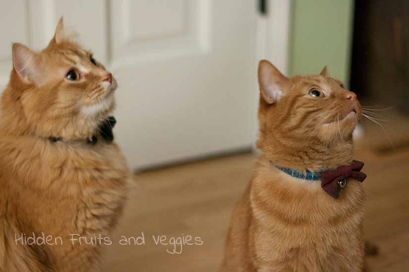 Brother best friends rockin' bow ties