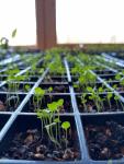 Seeding Native Plants Webinar