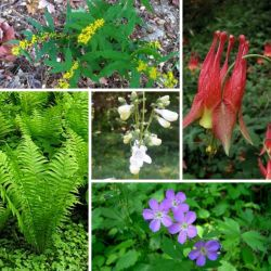 Under the Trees, Native Plant Shade Garden Kit