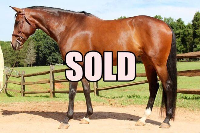 Hidden's McKayla - a Horse for Sale in Winston-Salem