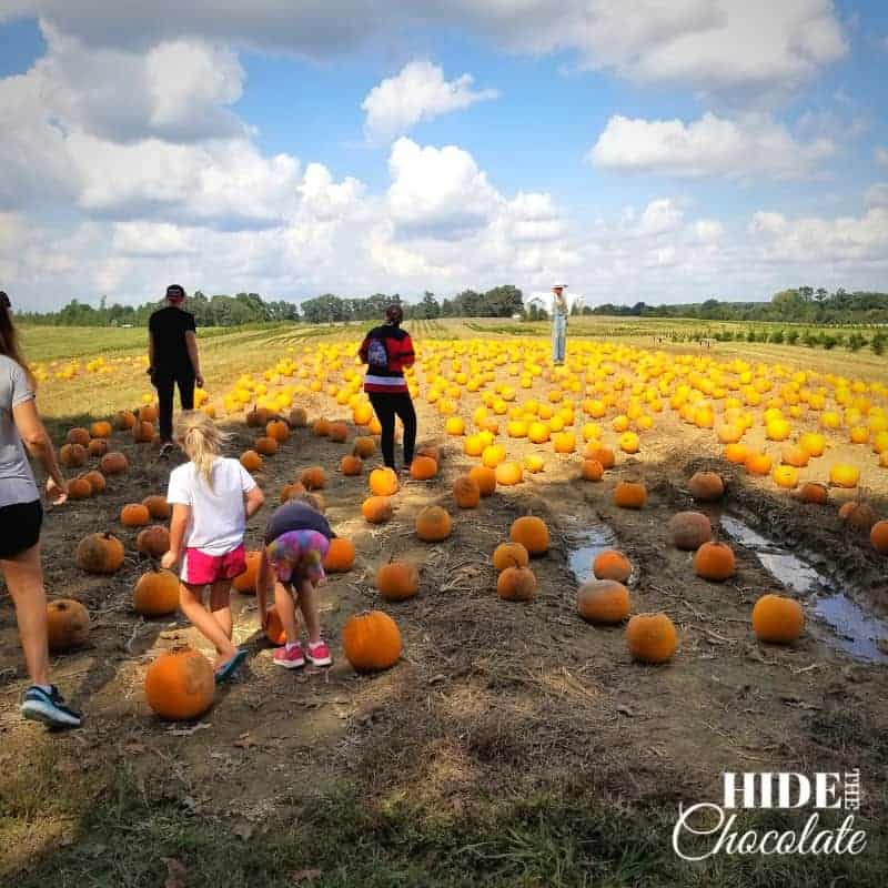 The Runaway Pumpkin Book Club - picking pumpkins