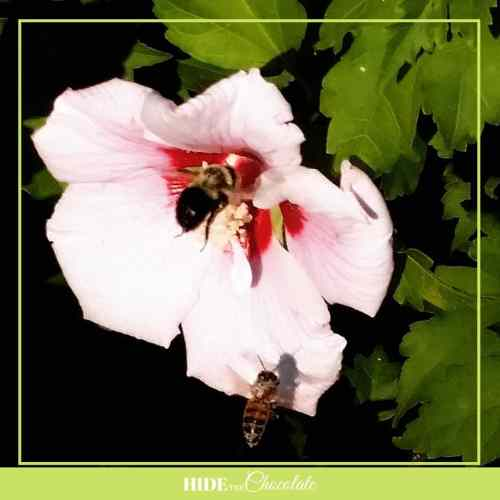 Little Bea Nature Book Club- Bees in Flowers