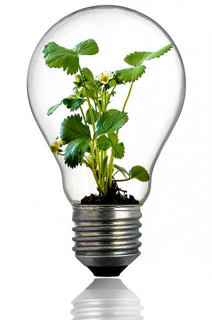 Luz artificial para plantas hidropon a casera - Iluminacion para plantas ...