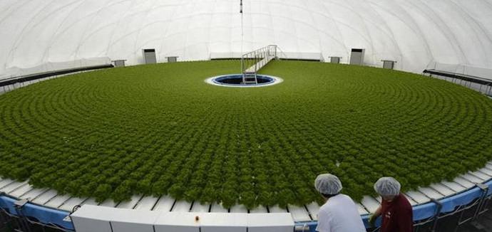 Cultivo Hidroponico Japones Granpa Dome Hidroponia Casera - Cultivo-hidroponicos