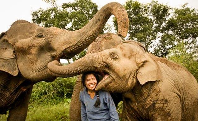 Thaise olifantenparken die je kunt vertrouwen