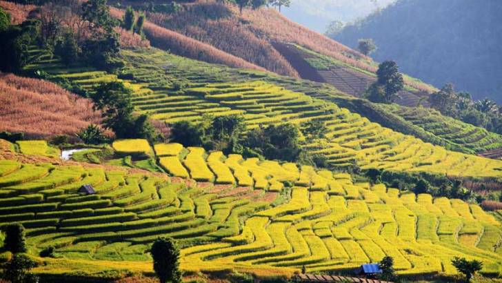 Reizen door Noord-Thailand