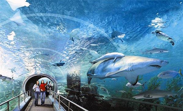 Siam Ocean World in Bangkok (video)