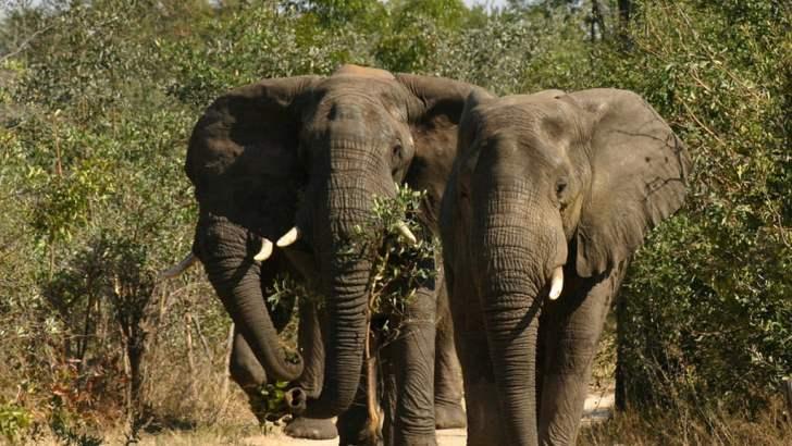 Tips als je wilde olifant in Thailand tegenkomt