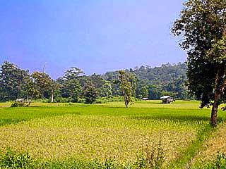 Roi Et, authentiek Thais platteland