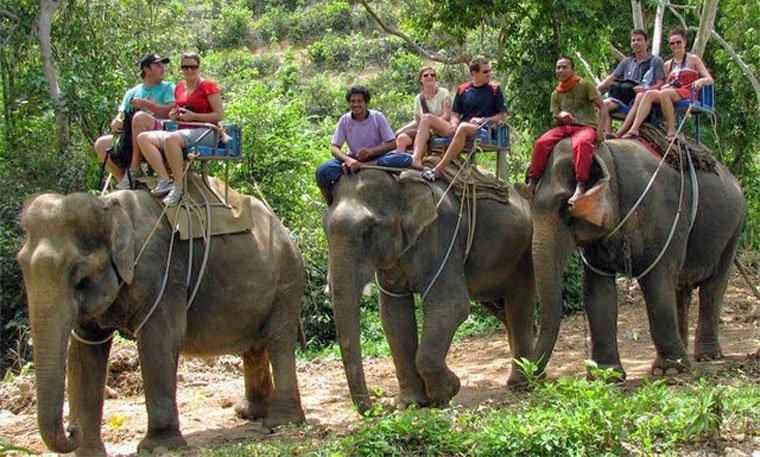 tripadvisor verdient aan dierenattracties