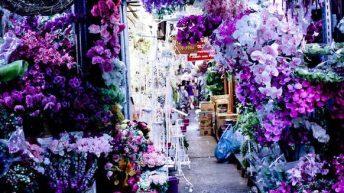 Paarse pracht op bloemenmarkt Pak Khlong