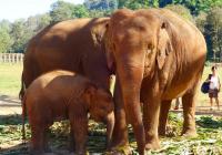 Diervriendelijke olifantenparken in Thailand