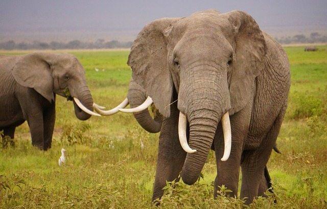 Thaise olifant vernielt politiepost